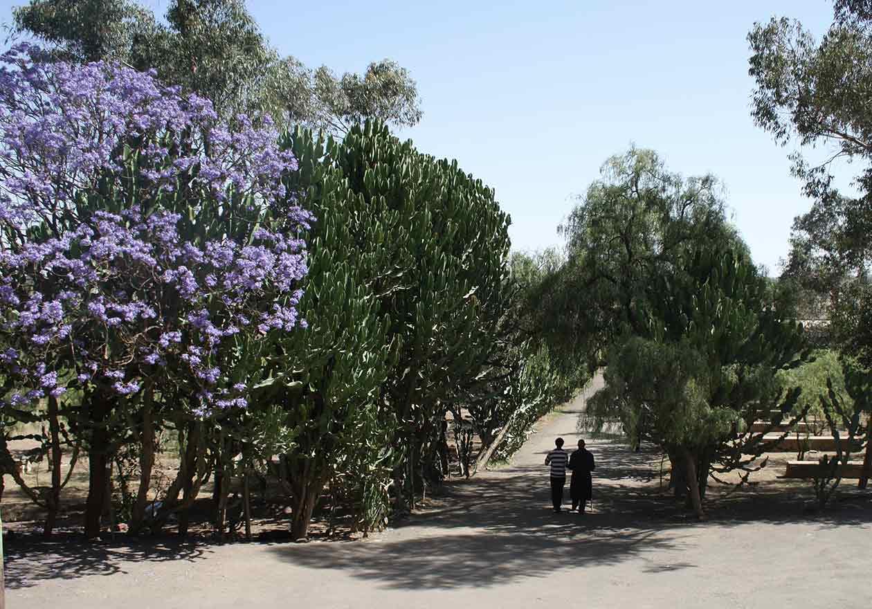 asmera_tour-eritrea_25