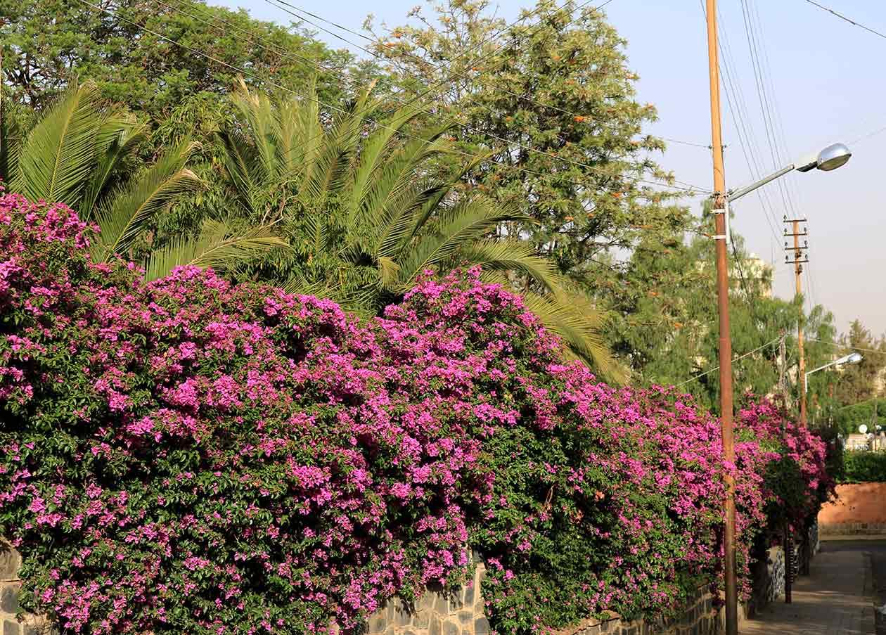 asmera_tour-eritrea_8