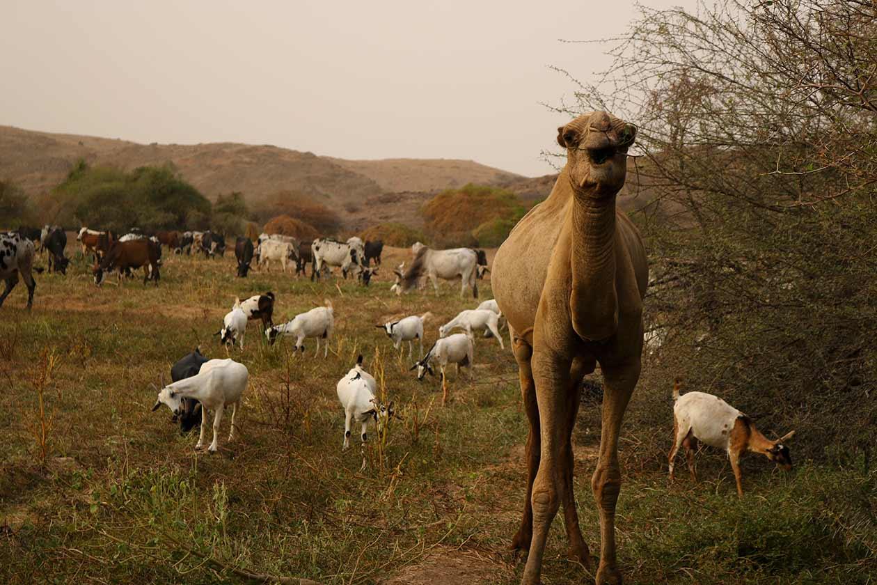 gindai_tour-eritrea_1