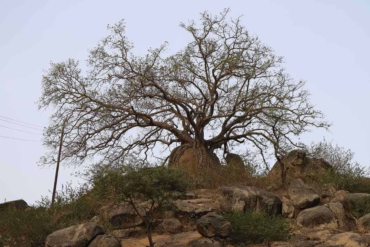 gindai_tour-eritrea_8