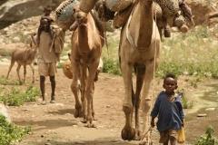 gallery_camel_image