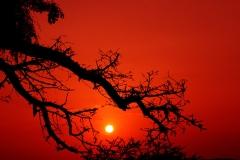 gallery_sahara_image_Sun_H